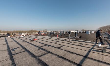 Groenland Kip dakoverzicht uitvoering
